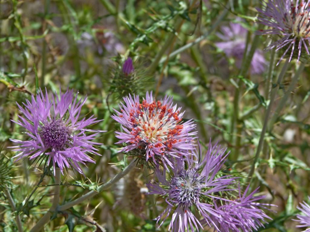 Sehr oft sieht man rote Milben auf den Blüten. Näheres dazu habe ich nicht gefunden.